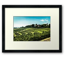 grapevine field in the italian countryside Framed Print