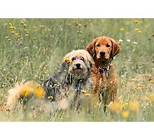 Kate and Sam - In the Meadow Photographic Print