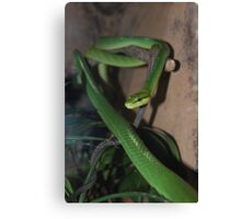 Red-Tailed Green Ratsnake Canvas Print