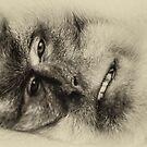 Monkey face by Bernie Rosser