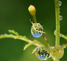 Garden Waterdrops 5 by relayer51