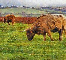 Highland cattle, Dartmoor, UK by buttonpresser