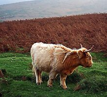 The Highlander, Dartmoor, UK by buttonpresser