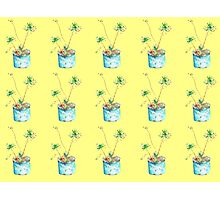 African Flowers Photographic Print