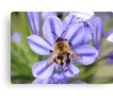 Bumble Bee on Allium Canvas Print