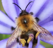 Bumble Bee on Allium Sticker