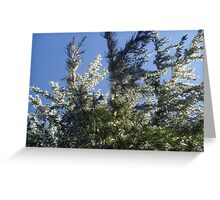 Pine tree with a touch of snow Greeting Card
