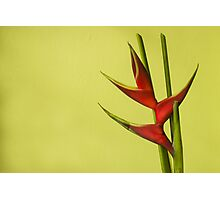 Amazing Helikonia Flower (Plant) - Object Photography Photographic Print