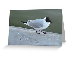 Dancing gull Greeting Card