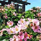 Pink Roses Near Trellis by Susan Savad
