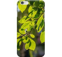 Sunset Leaves iPhone Case/Skin