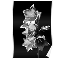 Black & White Flower Poster