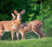 Spring Twins (White Tailed Deers) by Yannik Hay