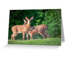 Spring Twins (White Tailed Deers) Greeting Card