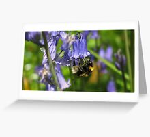 Bumble Bee on a Bluebell Greeting Card