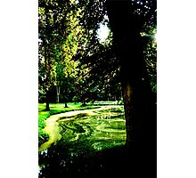 Mysterious Tree Photographic Print