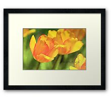 Pair of Tulips Framed Print