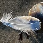 A Feather At The Beach by Susie Peek