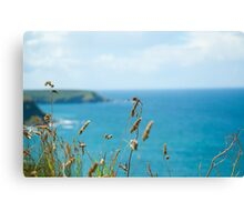 Looking Seaward through cliff top grass Canvas Print