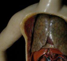 anatomy Sticker
