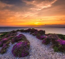 Sunset Path by manateevoyager