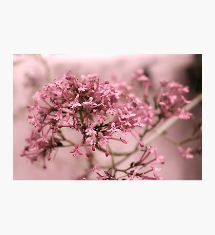 Pink Spring Flowers Photographic Print