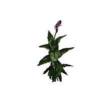 Garden Herb Fresh Mint Acrylic On Paper Fine Art Painting by JamesPeart