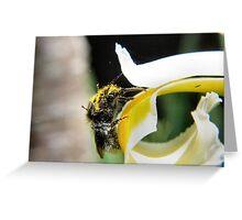 Abundance of pollen Greeting Card