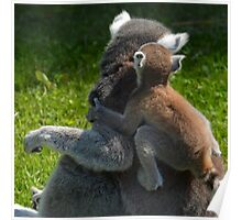 Mummy Lemur pounced on by baby - Photography Poster
