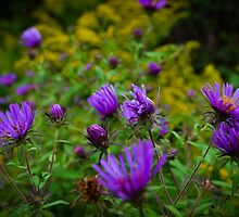 Purple Flowers by Irena Paluch