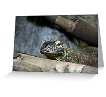 Inside the Reptile House Greeting Card