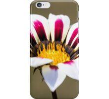 Gazania iPhone Case/Skin