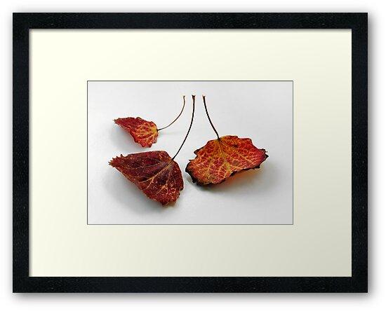 Leafing by Jonas Bohlin