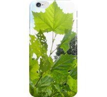 Leaves Reaching iPhone Case/Skin