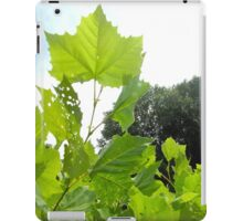 Leaves Reaching iPad Case/Skin