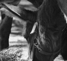 Donkeys Sticker
