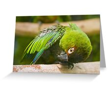 Green Parakeet Greeting Card