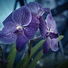 Nighttime in the Orchid House by Clare Colins