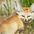 Fennec Fox by Dominika Aniola