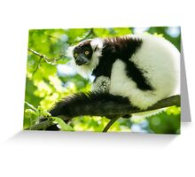 Black-and-white Ruffed Lemur Greeting Card