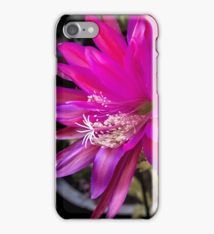 Nature's colour scheme iPhone Case/Skin
