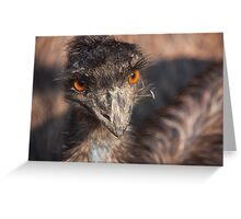 Emu close-up Greeting Card