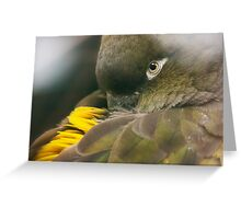 Burrowing Parrot Greeting Card