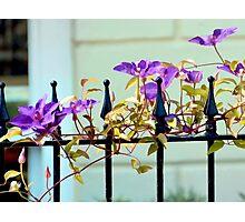 Purple fence adornment Photographic Print