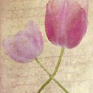 Tulip Twist by DIANE  FIFIELD