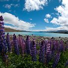 Lupines at Lake Tekapo by Norman Repacholi