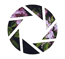 Aperture Floral Photographic Print