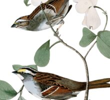White throated Sparrow Sticker