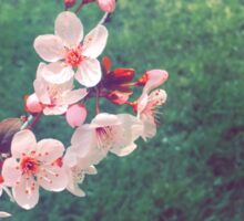 Plum blossoms Sticker