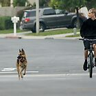 Look both ways ... (My Son with his dog in training Dec. 2010 La Mirada, CA USA)   by leih2008
